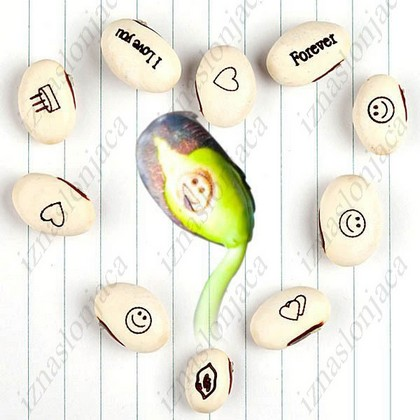 Magična semena za romantično rastlino